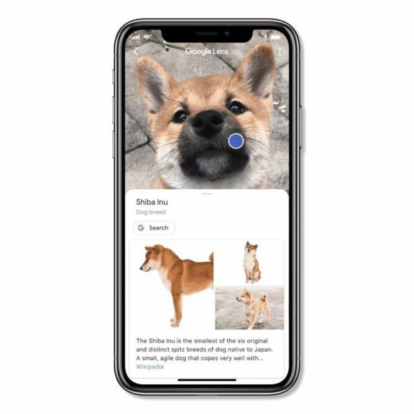 Visual Search perro